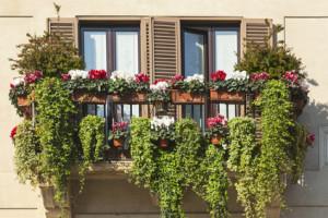 Balkon-Blumen
